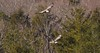 7K8A8984 (rpealit) Tags: scenery wildlife nature new york state bald eagles bird