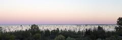 2016.11.17.05.22.13-Menindee pano 1 (www.davidmolloyphotography.com) Tags: newsouthwales menindee kinchega kincheganationalpark lake dawn panorama
