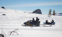 Offroad driver, Norefjell, Norway (KronaPhoto) Tags: natur landskap vinter winter snø ice offroad scooter drive vehicle kjøretøy people mennesker utpåtur snøscooter