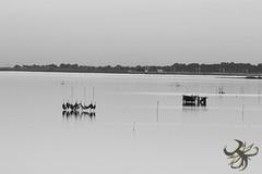 Filets (Thierry Poupon) Tags: bages etangs reflet ciel contrejour filets noiretblanc soir languedoc france fr sky pond laguna water blackandwhite web fishing