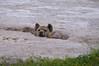 IMGP7981b (Micano2008) Tags: kenia africa amboseli parquenacional pentax mamifero hienamanchada crocutacrocuta