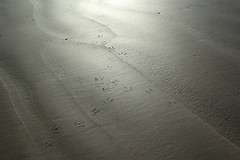 IMG_1939 (mamalaas) Tags: plage beach sable sand landscape paysage nature animal light lumière