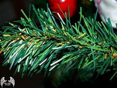 🎄🎄🎄 (TheSamuelYears) Tags: christmas focus closeup christmastree instagramapp macro bristle pine xmas holiday holidays green brown lightbrown artificial artificialtree fujifilmfinepixs9100