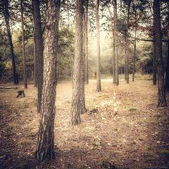 A Passeggio nel Parco-1 (Roberto Gaudenzi) Tags: parco alberi trees boschi woods