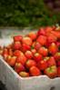 strawberries (Sam Scholes) Tags: shopping bedugul market vacation indonesia bali travel baturiti id