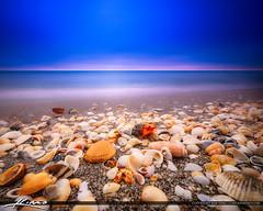 Shells at Beach Long Exposure HDR Photography Square (Captain Kimo) Tags: aurorahdr2017 beach captainkimo carlinpark hdrphotography nikhdrefx seashells shells southflorida
