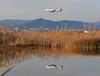 Reflejo (vic_206) Tags: bcn lebl avión plane reflejo reflection deltadelllobregat estanydecaltet vueling airbusa320