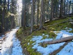 West Bragg Creek Winter Hike - Various trails - Beautiful moss uncovered by melting snow (benlarhome) Tags: braggcreek westbraggcreek alberta canada hike hiking trek trekking trail path