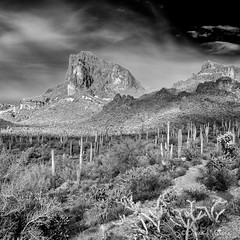 The Superstition Mountains and the Saguaro Field (claudiov958) Tags: arizona biancoenero blackwhite blancoynegro cactus černýabílý claudiovaldés czarnyibiały landscape mediumformat mediumformatcamera mediumformatdigital noiretblanc pentax645z pretoebranco ruins saguaro schwarzundweiss superstitionmountains черноеибелое ngc pentaxart smcpentaxfa6453355mmf45al desert mountains