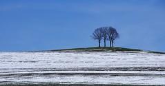 A Winter's Day [Explored Jan 11, 2017] (G_E_R_D) Tags: winter snow schnee trees bäume blau blue