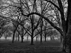 Play Misty for Me (TuthFaree) Tags: 7dwf elements pecans orchard fog ga swga georgia agriculture crop farm rural wow