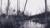 Lonely Travels (Mathiaswayne) Tags: bay flag pond maryland calvert county black white bw nikon trail water woods