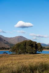 Scotland-28.jpg (paulvwright) Tags: nikon tree scotland landscape nikond810 fall d810 lochawe clouds