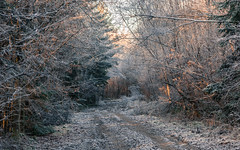 Winter / Hiver (tribsa2) Tags: marculescueugendreamsoflightportal winter hiver bos forest foret