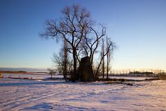 witch's cottage in the dawn (Jules Marco) Tags: witchscottage hexenhaus winter winterzeit wintry winterlandschaft trees bäume hütte cottage snow schnee woodquarter waldviertel niederösterreich loweraustria österreich austria canon eos600d sigma1020mmf35exdchsm weitwinkel wideanglelens blauerhimmel bluesky morning morgen sunrise sonnenaufgang dawn