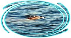 Copy of DSC_0004 (David's digits) Tags: fun florida dolphin wildlife saltlife