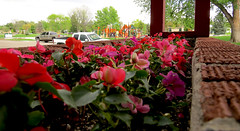 Day_158_2015 (Eric J. Schultz) Tags: park flowers sunday ourdoors day158 project365