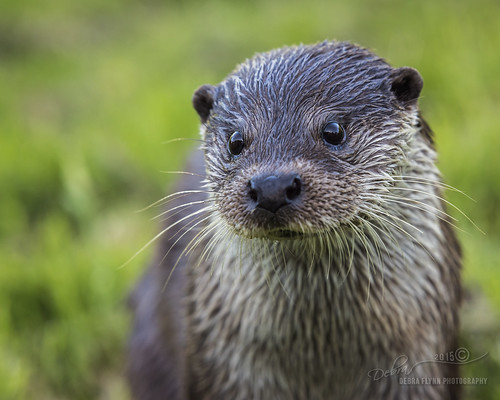 Emy the Otter
