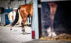 Concours Conthey | Switzerland | 13.06.2015 (#vmivelaz) Tags: horse sport canon cheval schweiz switzerland jumping europe suisse vinz contest 5d concours saut equine valais lightroom equitation conthey canoneos5dmarkiii vincentmivelaz vmivelaz