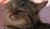 Tommy sunbathing (PurpleTita) Tags: summer italy cats pets mountain nature cat canon torino italia estate natura piemonte turin gatto montagna piedmont gatti animali vallidilanzo eos1100d