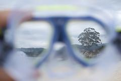 Subacuático (SAMU CS) Tags: 35mm arbol mar nikon galicia verano montaña rbol d40x