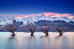 Rise Up (PaulReiffer) Tags: new old longexposure pink blue trees winter newzealand sky lake snow seascape mountains cold ice water sunrise landscape pier bare jetty zealand willow otago queenstown wakatipu glenorchy purenz nzmustsee nzmustdo