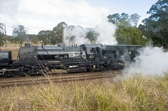 6029, on 9S91 on Exeter Bank, Main South, NSW, 3rd August, 2015. (garratt3) Tags: railroad digital train pentax takumar rail railway australia trains tourist steam newsouthwales locomotive aus railways railfan steamlocomotive garratt steampower steamloco mainsouth arhs standardgauge 6029 nswgr 60class nswheritage rpaunswad60class railpage:class=85 railpage:loco=6029 rpaunswad60class6029 nswcoaltrains newsouthwalescoaltrains