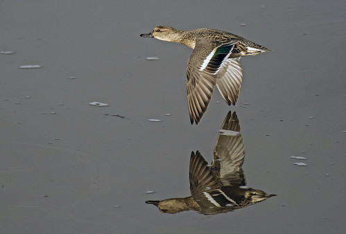 _DSC9066.....TEAL ( female)