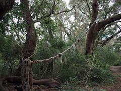 Rope Swing (BunnyHugger) Tags: charleston dorothybkearnspark letterboxing southcarolina wandoriver