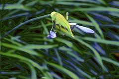 Flora Abstract!! (maginoz1) Tags: abstract art manipulate flowers flora summer december 2016 bullarosegarden melbourne victoria australia canon g3x