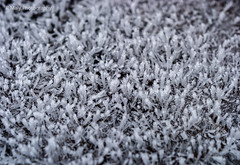 Frozen (René Maly) Tags: renémaly minolta rd3000 vectis vline macro 3550 50mm ice snow frozen