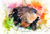 Virginia Rail with Brood (Johnrw1491) Tags: virginiarails brood color watercolor creative digital wildlife art artistic avian creations wild nature mama chicks water birds waders