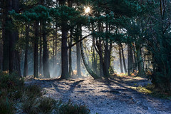 mystical misty morning (Emma Varley) Tags: mist woods trees sunburst sun eerie mystical beautiful shadows light frost heather