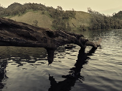 Serenity (elly.sugab) Tags: lake reflection water mountain tree wood rainforest semeru ranukumbolo danau