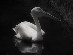 Don't shoot me! (hp2850) Tags: nikon wildlife india birds bird lake northeastindia