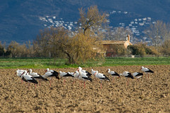 Warming up in the morning (Jordi Ramon Fotografia) Tags: aiguamollsdempordà catalonia nature outdoors landscape parc fauna winter storks