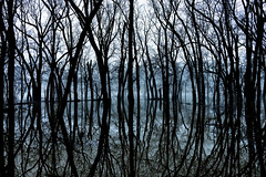 after the flood (paulh192) Tags: river flood grandriver michigan grandrapids reflections silhouette abstract detail water winter fog