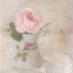 To all rose lovers. (BirgittaSjostedt) Tags: rose card closeup romantic beauty weddinggreetings flower textured still pastel pot birgittasjostedt magicunicornverybest ie