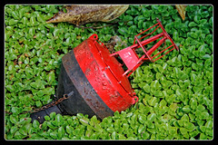 Somthing Red (gill4kleuren - 11 ml views) Tags: red orange flower green power rood oranje