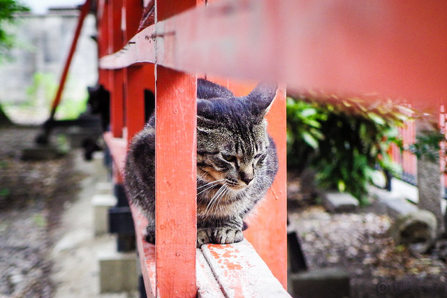 Today's Cat@2015-06-08