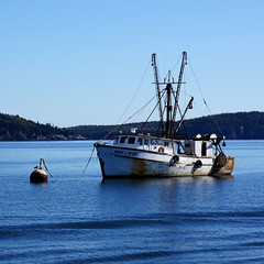 Wind and Spirit (nedlugr) Tags: ocean blue usa islands boat wake seagull maine atlantic bouy fishingboat atsea barharbor