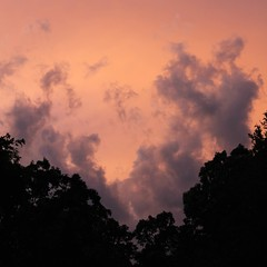 Southern Skies (Alex Szymanek) Tags: from above pink trees sunset red summer sky orange black tree texture nature up look birds june vertical clouds last contrast forest canon silver dark square relax landscape rising lights evening stand still blood movement twilight focus day skies quiet silent slow view ar no south sunday under shapes large salmon clarity going shades clear southern burning saturation end late layers arkansas karma moment shape idle chill coulds upon bentonville darker 2015 magestic nohorizon quieter
