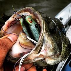 Deep! #jc1scastaway #froggy #frogfish #FSACustomRods #teamdaiwa #tatutatyper #kayakfishing #kayakbassfishing #roadtrip