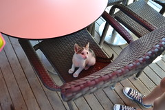 Playful Kittens (Marzanne) Tags: travel summer vacation cats animals turkey kittens greece ephesus efes kusadasi