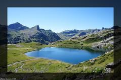 Un t dans les Hautes Pyrnes... (sabinelacombe) Tags: nature fleurs montagne lacs chardons hautespyrnes ayous gentau lacgentau