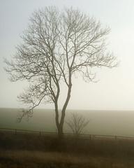 Junior and Me - Sony A7r (magnus.joensson) Tags: sweden swedish skåne haze fog mist sony a7r sonyfe702004 oss sel70200g handheld