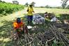 _DSC0177 (HarvestPlus Nigeria) Tags: nff nff2015 nutritious food fair