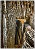 Pardon me while I slip past You. (TOXTETH L8) Tags: gledswood slipfence metalfencestake wire nsw australia