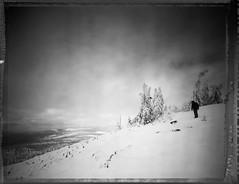 Blown & Bent (Bastiank80) Tags: largeformat lusen bent blown winter polaroid