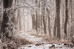 (A piece of nature.) Tags: zúzmara hoar hoarfrost frost forest hdr